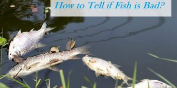 How can you tell if fish is spoiled?