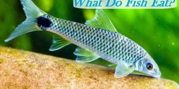 What Do Fish Eat
